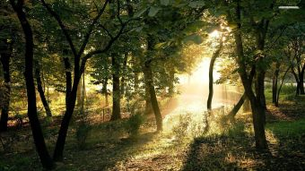 sun-shining-through-the-trees-2179-1920x1080